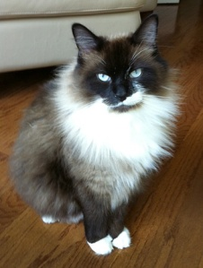 Cat-Taz